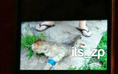 Живодеры убивали и пытали животных