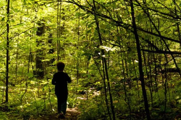 Школьник изнасиловал мальчика в лесу