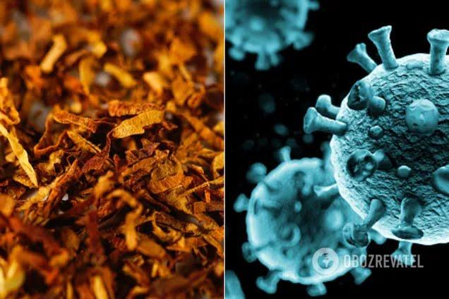 """Никотин """"конкурирует"""" с коронавирусом и блокирует его"""