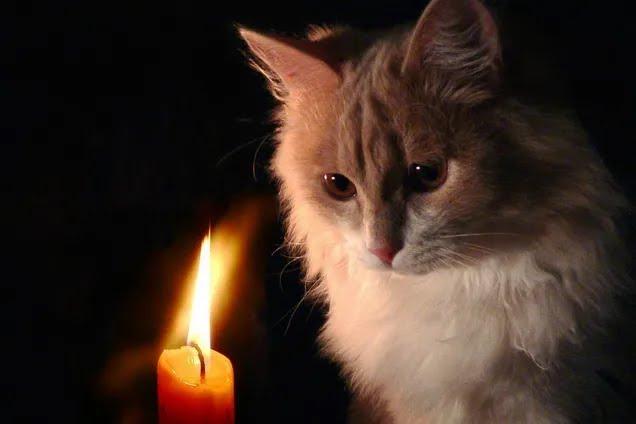 Часть Днепра останется без света 15 ноября