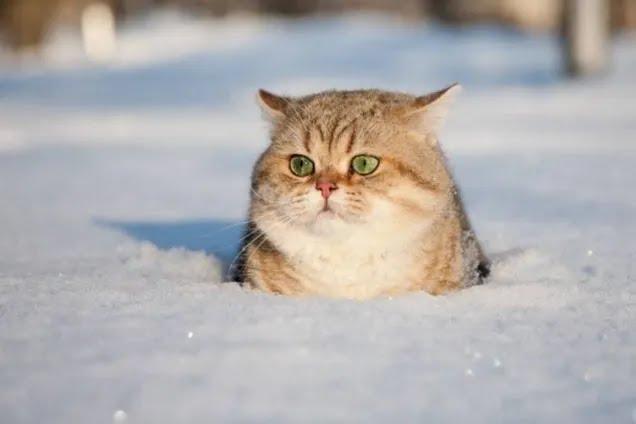 З'явився несподіваний прогноз на зиму в Україні